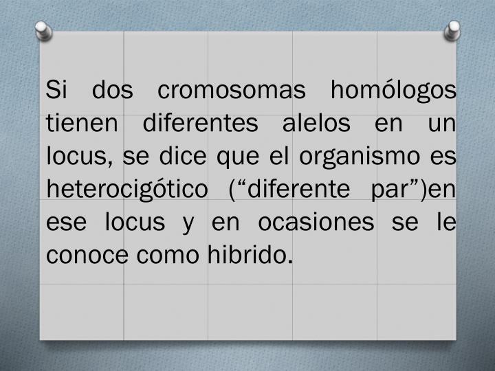 """Si dos cromosomas homólogos tienen diferentes alelos en un locus, se dice que el organismo es heterocigótico (""""diferente par"""")en ese locus y en ocasiones se le conoce como hibrido."""