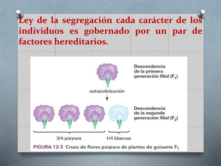 Ley de la segregación cada carácter de los individuos es gobernado por un par de factores hereditarios.