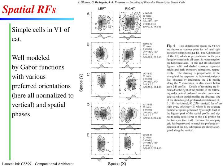 Spatial RFs