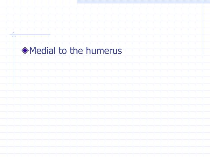 Medial to the humerus
