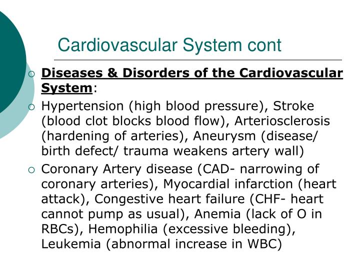Cardiovascular System cont