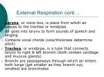 external respiration cont1