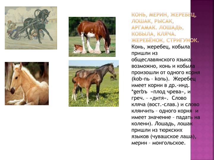 Конь, мерин, жеребец, лошак, рысак, аргамак. Лошадь, кобыла, кляча. Жеребёнок, стригунок.