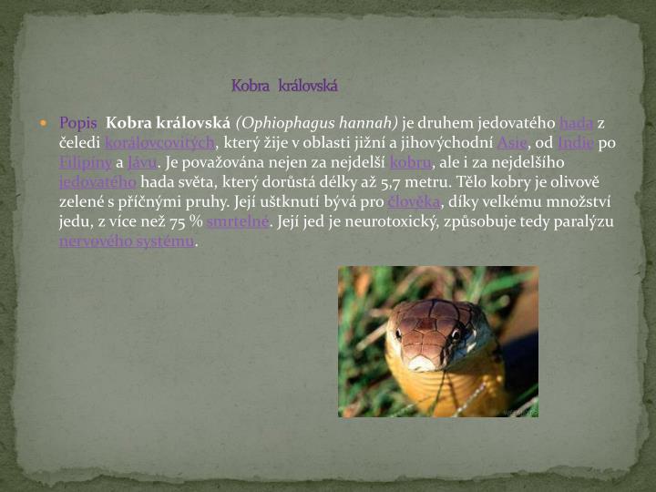 Kobra   královská