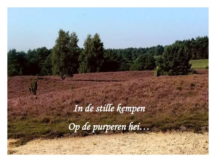 In de stille kempen