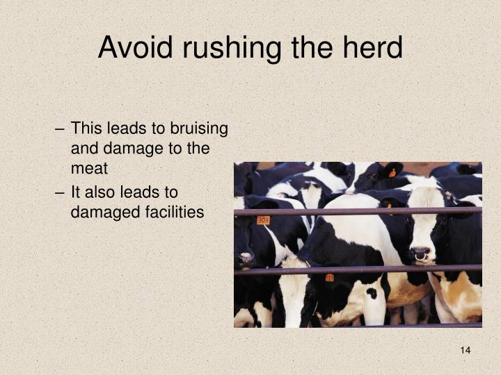 Avoid rushing the herd