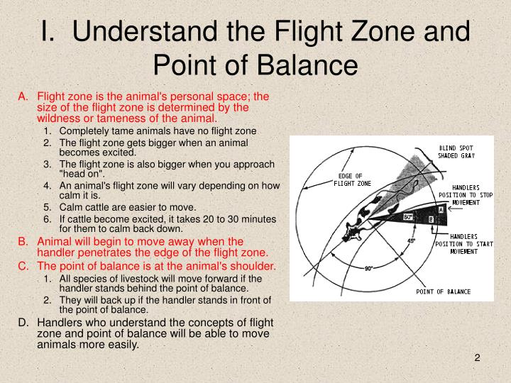 Flight zone is the animal's personal space; the size of the flight zone is determined by the wildness or tameness of the animal.