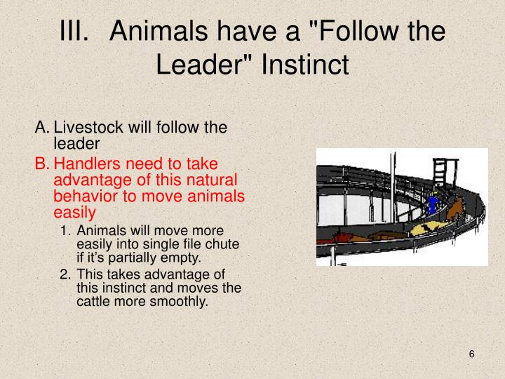 "III.	Animals have a ""Follow the Leader"" Instinct"