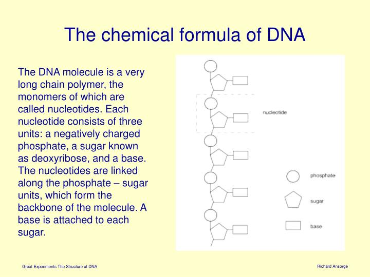 The chemical formula of DNA