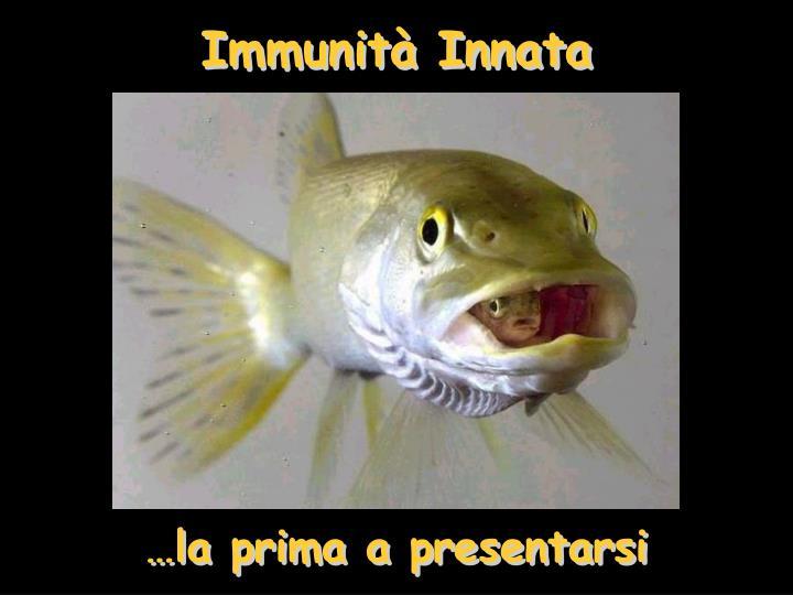 Immunità Innata