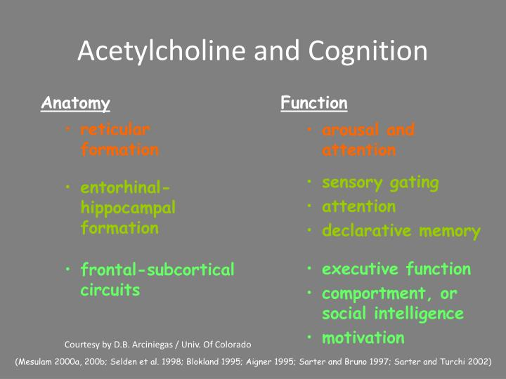 Acetylcholine and Cognition