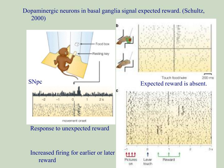 Dopaminergic neurons in basal ganglia signal expected reward. (