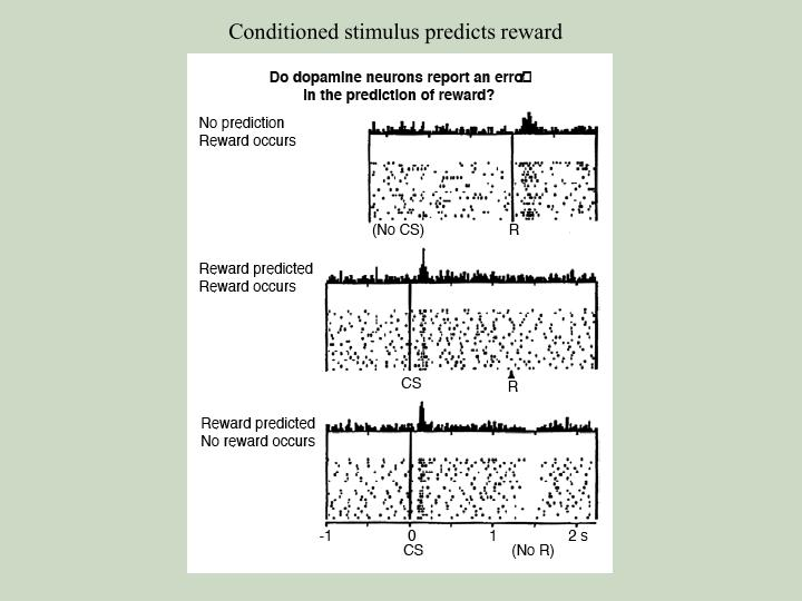 Conditioned stimulus predicts reward