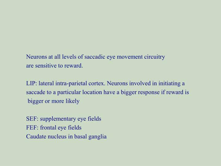 Neurons at all levels of saccadic eye movement circuitry