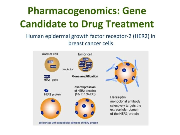 pharmacogenomics steps toward personalized medicine Purchase genomic and personalized medicine and pharmacogenomics makes this work an ideal companion for the many stakeholders of working toward the.