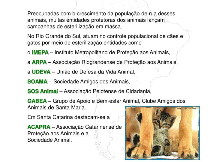 Preocupadas com o crescimento da população de rua desses animais, muitas entidades protetoras dos animais lançam campanhas de esterilização em massa.