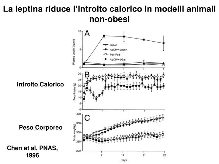 La leptina riduce l'introito calorico in modelli animali non-obesi