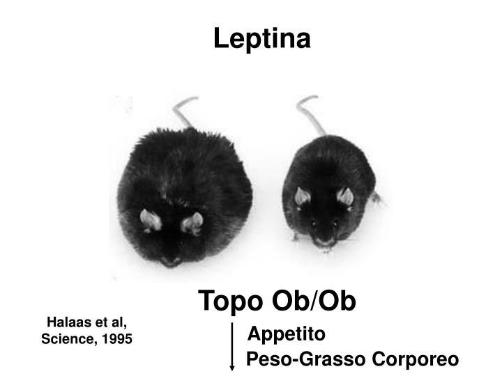 Leptina