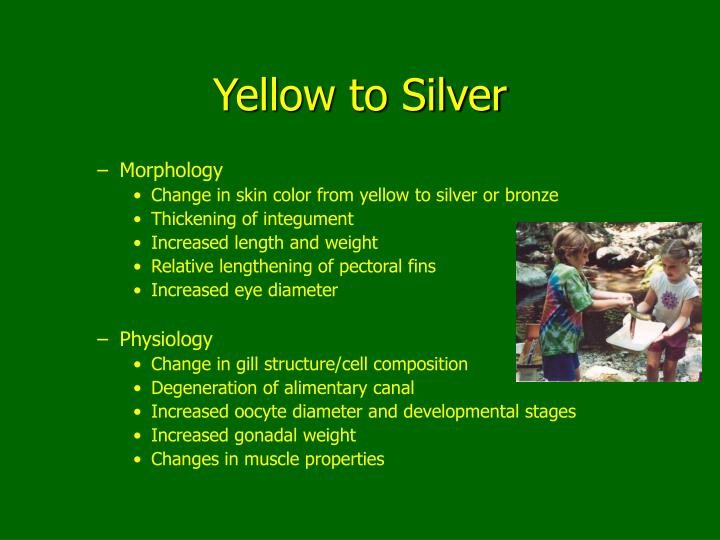 Yellow to Silver