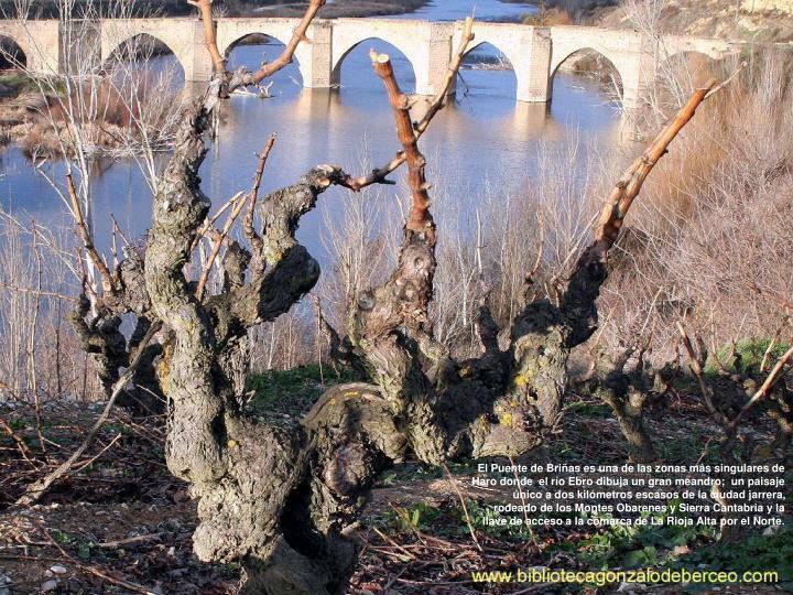 El Puente de Briñas es una de las zonas más singulares de Haro donde  el río Ebro dibuja un gran meandro;  un paisaje único a dos kilómetros escasos de la ciudad jarrera, rodeado de los Montes Obarenes y Sierra Cantabria y la llave de acceso a la comarca de La Rioja Alta por el Norte.
