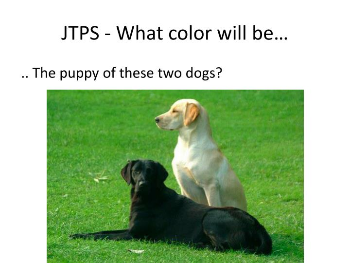 JTPS - What color will be…