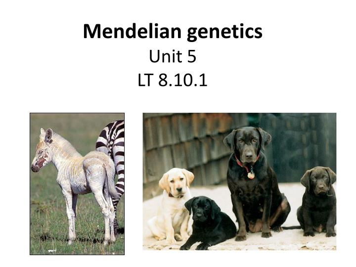 Mendelian genetics unit 5 lt 8 10 1