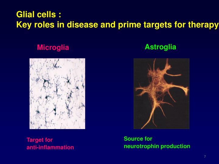 Glial cells :