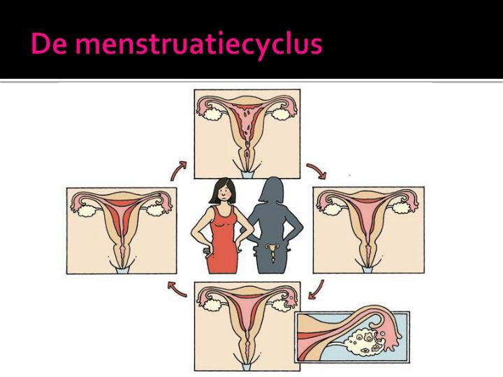 De menstruatiecyclus