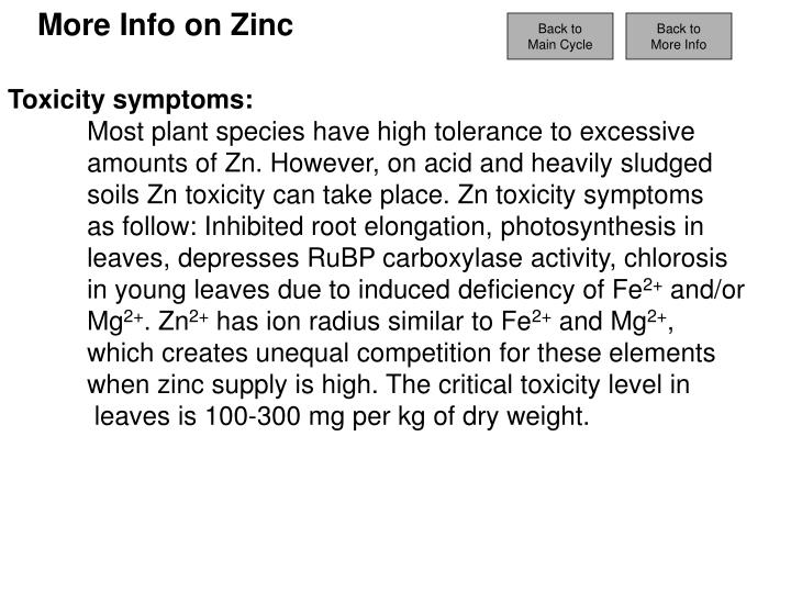 More Info on Zinc
