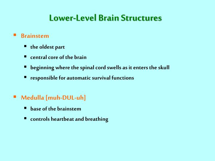 Lower-Level Brain Structures