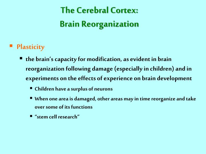The Cerebral Cortex: