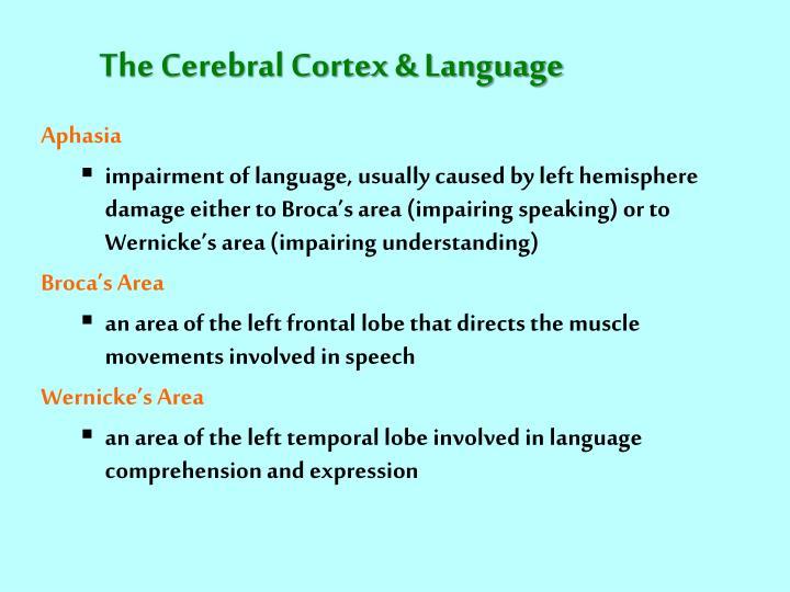 The Cerebral Cortex & Language