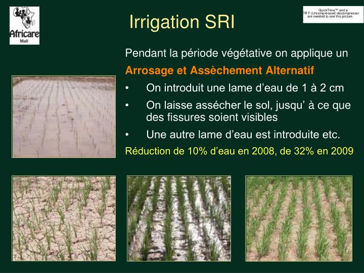 Irrigation SRI