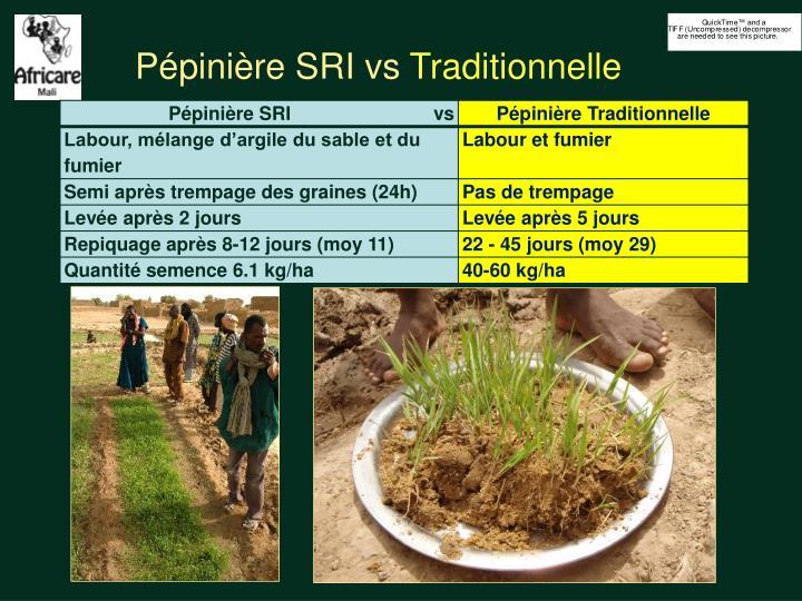 Pépinière SRI vs