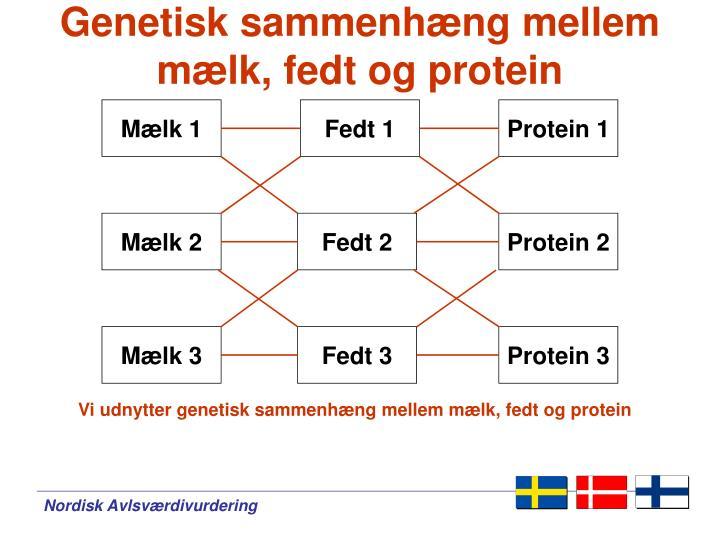 Genetisk sammenhæng mellem mælk, fedt og protein