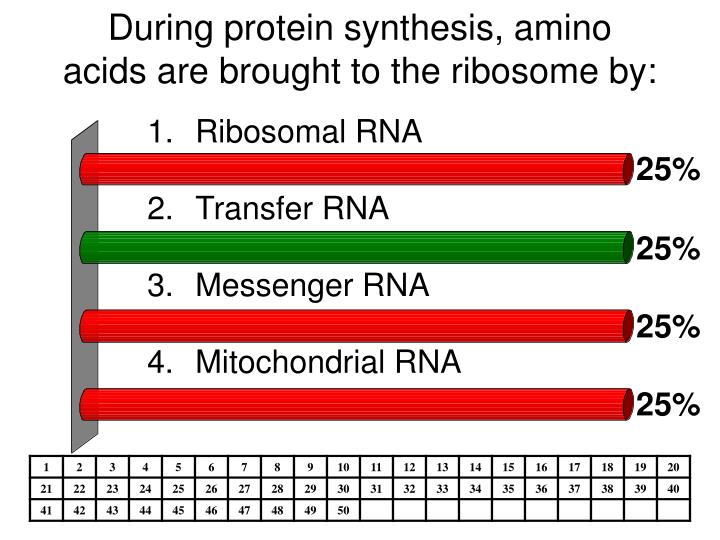 During protein synthesis, amino acids are brought to the ribosome by:
