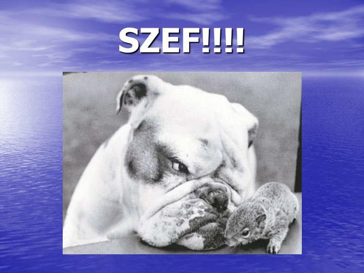 SZEF!!!!