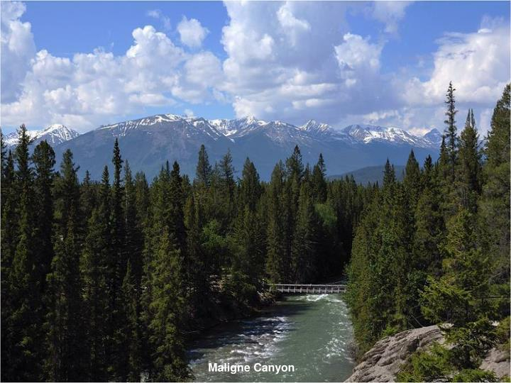 Maligne Canyon