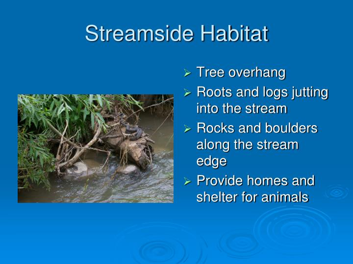 Streamside Habitat