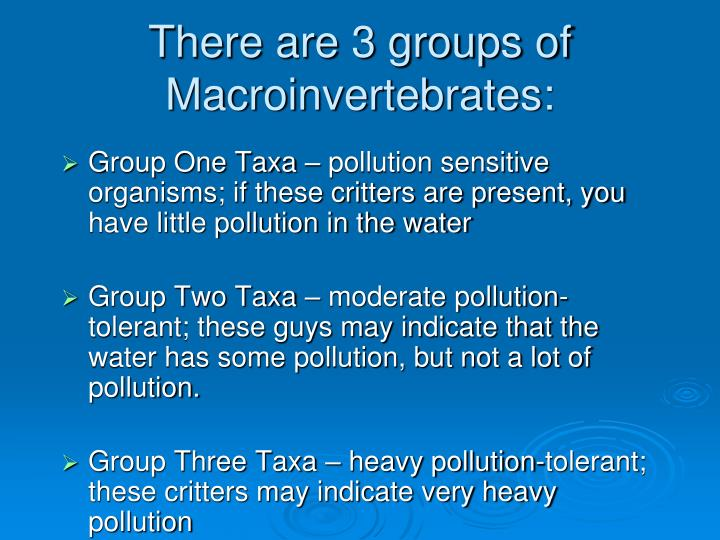 There are 3 groups of Macroinvertebrates: