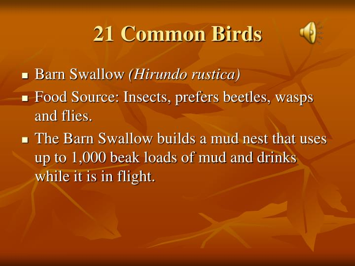 21 Common Birds