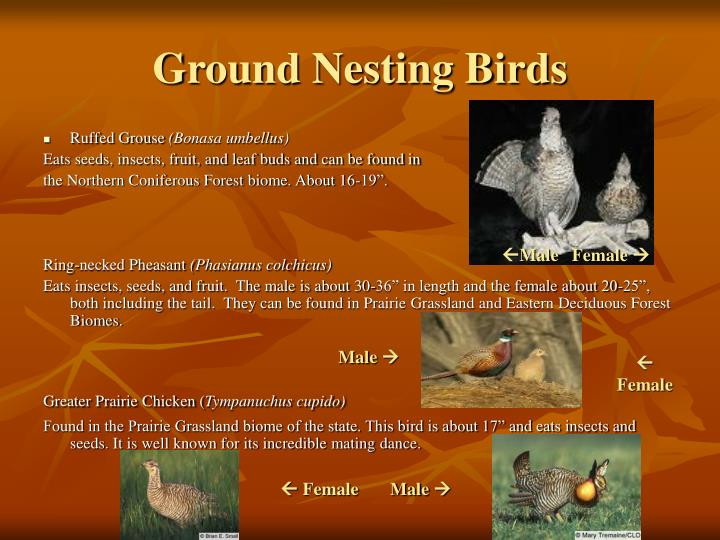 Ground Nesting Birds