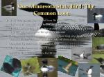 our minnesota state bird the common loon