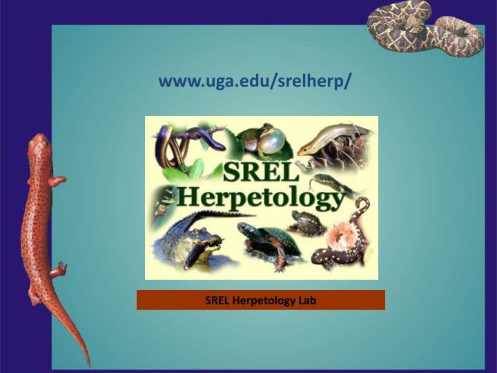 www.uga.edu/srelherp/