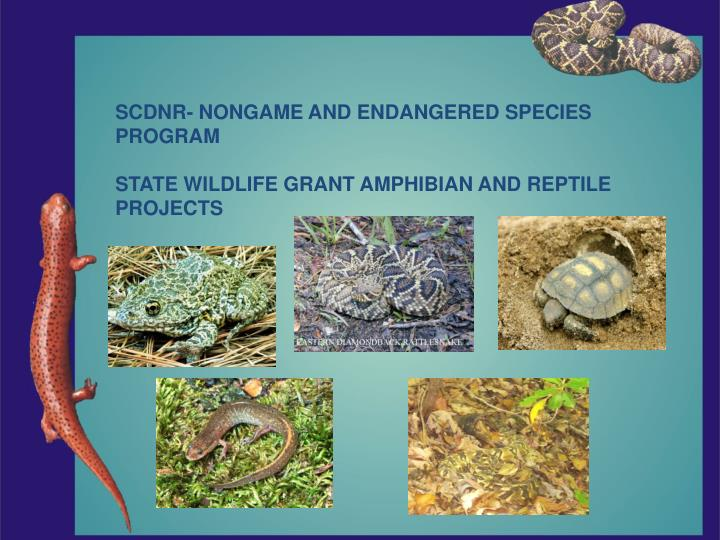 SCDNR- NONGAME AND ENDANGERED SPECIES
