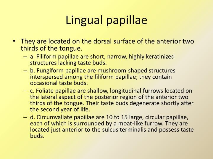 Lingual papillae