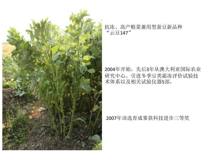 """抗冻、高产粮菜兼用型蚕豆新品种""""云豆"""