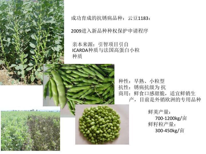 成功育成的抗锈病品种:云豆