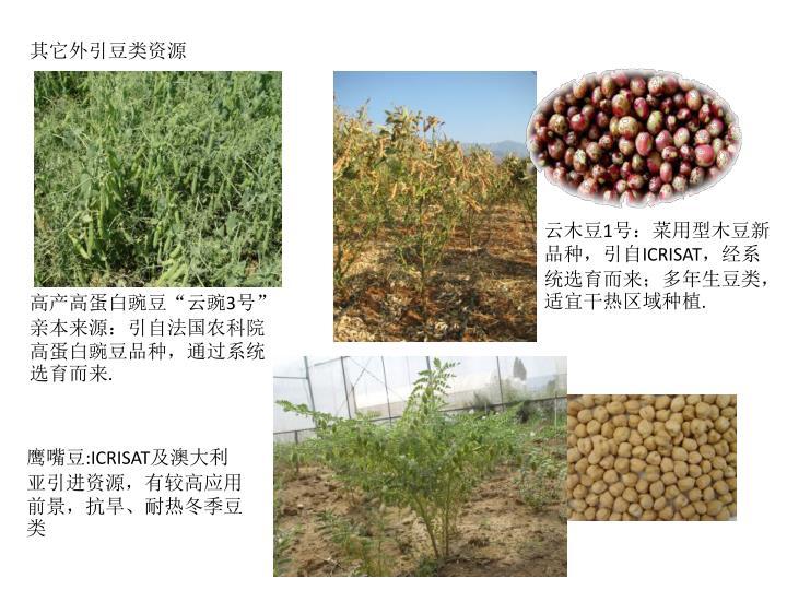 其它外引豆类资源