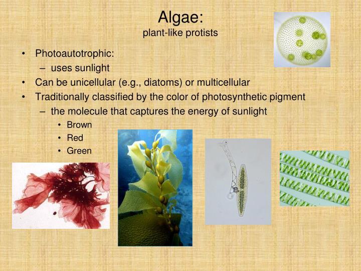 Algae: